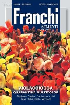 Violaciocca Quarantina Multicolor